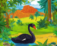 Cartoon scene - wild america animals - black swan Royalty Free Stock Photography