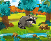 Cartoon scene - wild america animals - caricature - raccoon Stock Photography