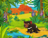 Cartoon scene - wild america animals - caricature - tasmanian devil Royalty Free Stock Image