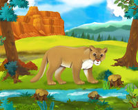 Cartoon scene - wild america animals - cougar. Happy and colorful illustation for the children Royalty Free Stock Photos