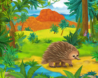 Cartoon scene - wild america animals - echidna Royalty Free Stock Image