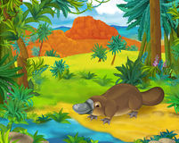 Cartoon scene - wild america animals - platypus. Happy and colorful llustration for the children Royalty Free Stock Photo