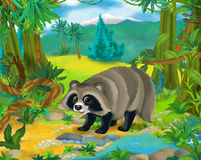 Cartoon scene - wild america animals - raccoon royalty free illustration