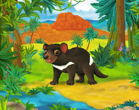 Cartoon scene - wild america animals - tasmanian devil Stock Image
