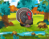 Cartoon scene - wild america animals - turkey Stock Image