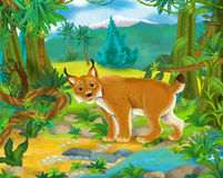 Cartoon scene - wild Asia animals - lynx Royalty Free Stock Photography