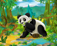 Cartoon scene - wild Asia animals - panda bear Royalty Free Stock Images