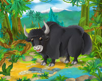 Cartoon scene - wild Asia animals - yak Royalty Free Stock Photo