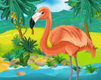 Cartoon scene - wild South America animals - flamingo Royalty Free Stock Photos
