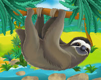 Cartoon scene - wild South America animals - sloth Royalty Free Stock Image