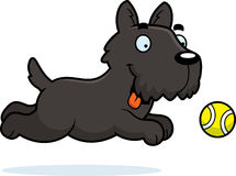 Cartoon Scottie Chasing Ball Stock Photo