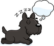 Cartoon Scottie Dreaming Royalty Free Stock Photo