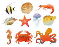 Cartoon Sea Fauna Elements Set. With shells shrimp seahorse starfish jellyfish crab octopus discus puffer fishes isolated vector illustration Royalty Free Stock Photos