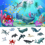 Cartoon Sea And Ocean Fauna Concept Stock Photos