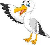 Cartoon seagull presenting  on white background Royalty Free Stock Images