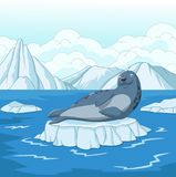 Cartoon seal on ice floe Royalty Free Stock Photography