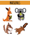 Cartoon Set of Cute Animals marsupials living in Australia and its Islands. Kangaroo, squirrel, numbat, anteater and Koala bear wi Royalty Free Stock Photo
