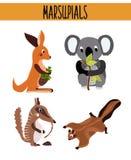 Cartoon Set of Cute Animals marsupials living in Australia and its Islands. Kangaroo, squirrel, numbat, anteater and Koala bear wi Royalty Free Stock Photo