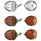 Cartoon set of  images of hazelnut and acorn Royalty Free Stock Photography