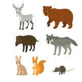 Cartoon set: northern deer bear boar wolf rabbit squirrel mouse Stock Photography