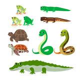 Cartoon set: tree frog newt aquatic turtle snake crocodile. Vector cartoon animals: tree frog newt aquatic turtle snake crocodile. The drawn set of wild creeping stock illustration