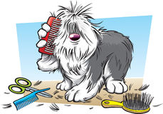 Cartoon shaggy dog. A cartoon shaggy dog having a brush Royalty Free Stock Images
