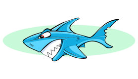 Cartoon Shark. Illustration of aggressive Blue shark Royalty Free Stock Images