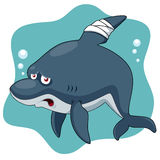 Cartoon Shark be injured Royalty Free Stock Images