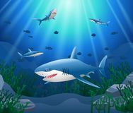 Cartoon shark with Coral. Reef Underwater in Ocean Stock Photo