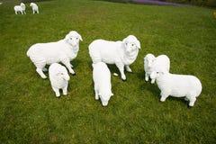 Cartoon sheep Stock Photo