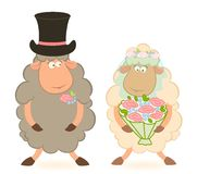 Cartoon sheep bridegroom and bride. On a white background for a design Stock Photography