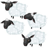 Cartoon sheep in four poses, vector animal Royalty Free Stock Image