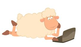 Cartoon sheep and laptop Stock Photography