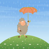 Cartoon sheep with umbrella. Stock Photo