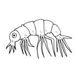 Cartoon shrimp Stock Photography