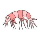 Cartoon shrimp Royalty Free Stock Image