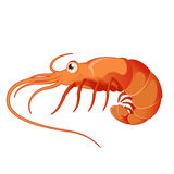 Cartoon shrimp Royalty Free Stock Photography