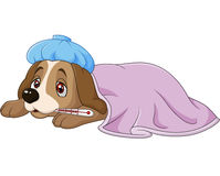 Cartoon sick dog with ice bag and thermometer , isolated on white background Royalty Free Stock Photos