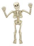 Cartoon Skeleton Character vector illustration