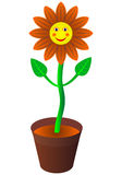 Cartoon smile flower in a flowerpot Stock Photography