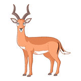 Cartoon smiling Impala. Vector image of the Cartoon smiling Impala Royalty Free Stock Photography