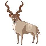Cartoon smiling Kudu Stock Image