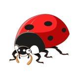 Cartoon smiling ladybird Stock Photo