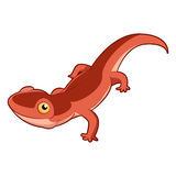 Cartoon smiling Newt. Vector image of the Cartoon smiling Newt Royalty Free Stock Images