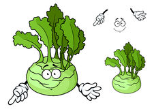Cartoon smiling ripe kohlrabi vegetable cartoon Royalty Free Stock Photography