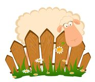 Cartoon smiling sheep after a fence Royalty Free Stock Photo