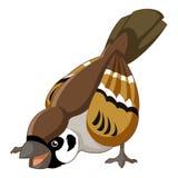 Cartoon smiling sparrow Royalty Free Stock Image
