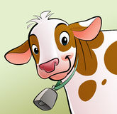 Smiling cow with brown dots and a cowbell. A cartoon smiling, white with brown dots, cow with a cowbell Stock Photos