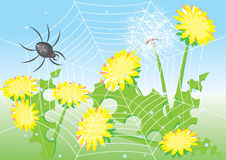 Cartoon spider and dandelions. Stock Photos