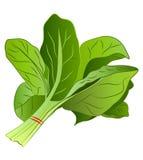 Cartoon Spinach Stock Photo